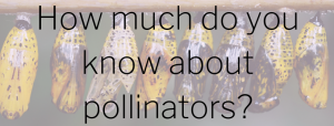 "Image for ""How much about Pollinators?"""
