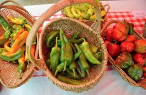 Fresh peppers and tomatos at the Food Day Festival.
