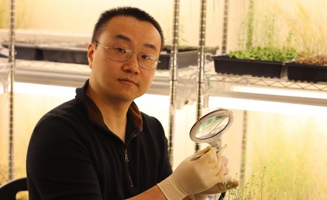 UM researcher explores effects of climate change on plant growth